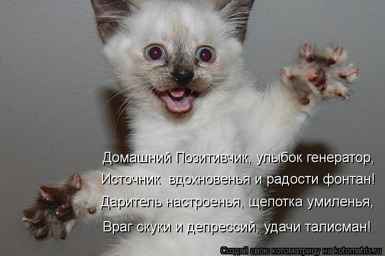 Котоматрица - Домашний Позитивчик, улыбок генератор, Источник  вдохновенья и радости
