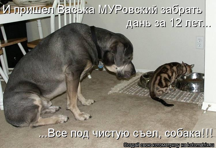 Котоматрица - И пришел Васька МУРовский забрать дань за 12 лет... ...Все под чистую