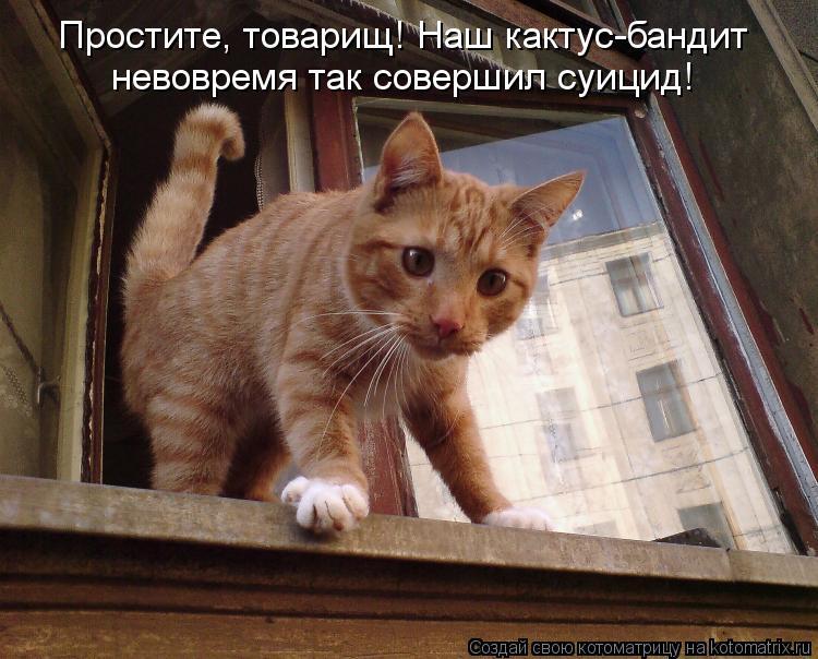 Котоматрица: Простите, товарищ! Наш кактус-бандит невовремя так совершил суицид!