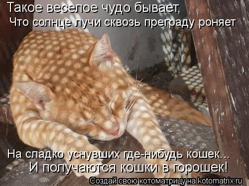 Котоматрица: Такое веселое чудо бывает, Что солнце лучи сквозь преграду роняет На сладко уснувших где-нибудь кошек... И получаются кошки в горошек!