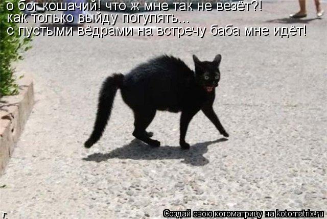Котоматрица: как только выйду погулять... с пустыми вёдрами на встречу баба мне идёт!  о бог кошачий! что ж мне так не везёт?!
