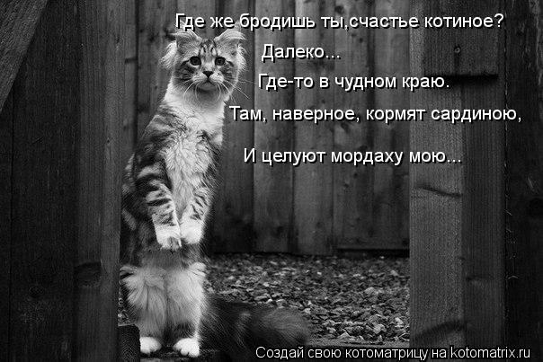 Котоматрица: Где же бродишь ты,счастье котиное? Далеко... Где-то в чудном краю. Там, наверное, кормят сардиною, И целуют мордаху мою...