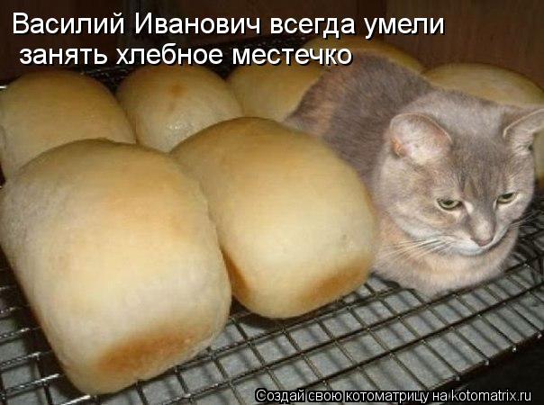 Котоматрица: Василий Иванович всегда умели  занять хлебное местечко