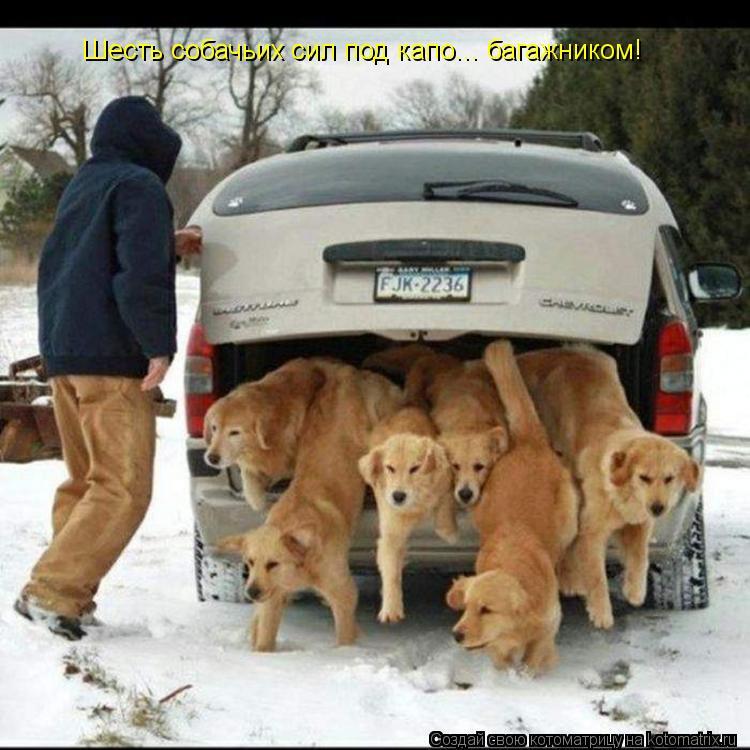 Котоматрица: Шесть собачьих сил под капо... багажником!