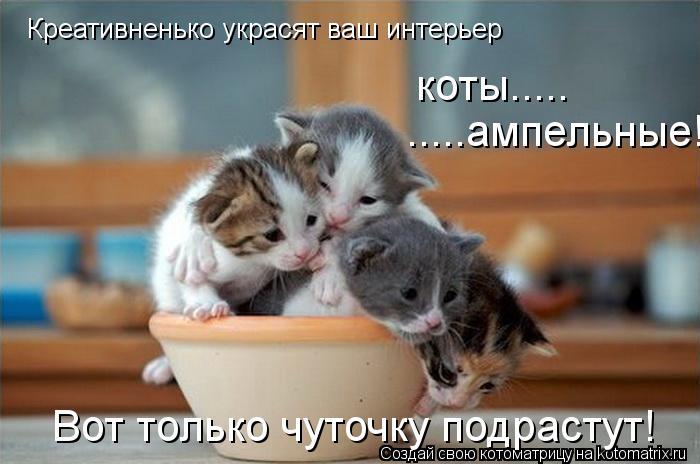 Котоматрица: Креативненько украсят ваш интерьер   коты.....  .....ампельные! Вот только чуточку подрастут!