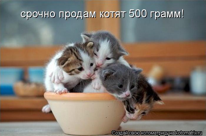 Котоматрица: срочно продам котят 500 грамм!