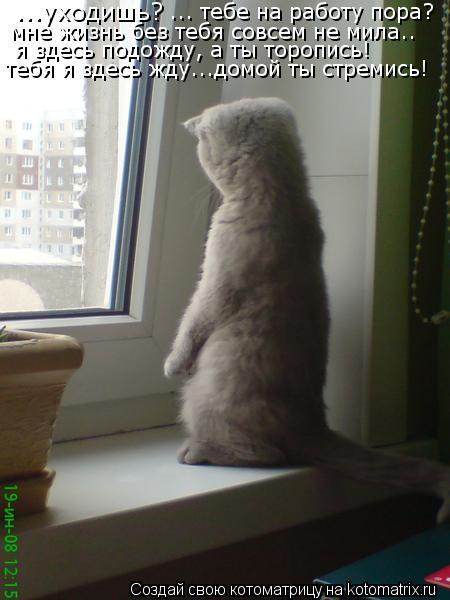 Котоматрица: ...уходишь? ... тебе на работу пора?  мне жизнь без тебя совсем не мила.. я здесь подожду, а ты торопись! тебя я здесь жду...домой ты стремись!