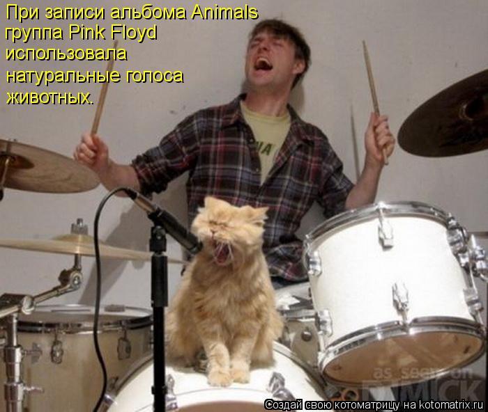 Котоматрица: При записи альбома Animals  группа Pink Floyd использовала натуральные голоса  животных.