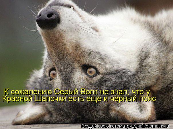 Котоматрица: К сожалению Серый Волк не знал, что у Красной Шапочки есть ещё и чёрный пояс
