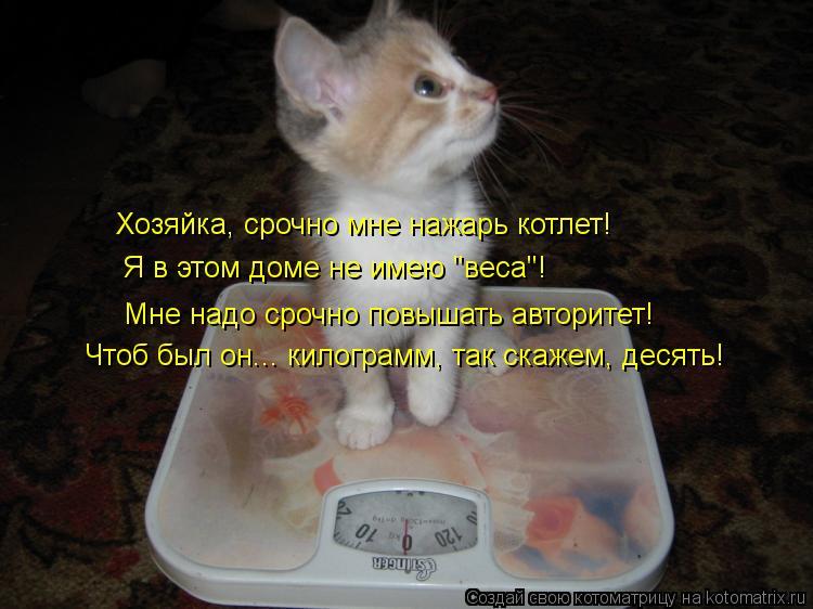 """Котоматрица: Хозяйка, срочно мне нажарь котлет! Мне надо срочно повышать авторитет!  Я в этом доме не имею """"веса""""! Чтоб был он... килограмм, так скажем, десят"""