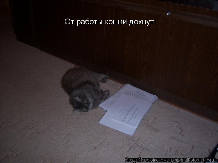 Котоматрица: От работы кошки дохнут!