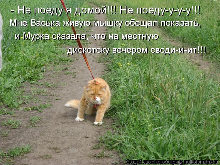 Котоматрица - Мне Васька живую мышку обещал показать,   и Мурка сказала, что на мест