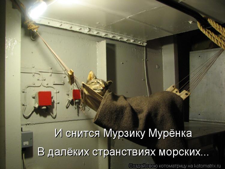 Котоматрица: И снится Мурзику Мурёнка В далёких странствиях морских...
