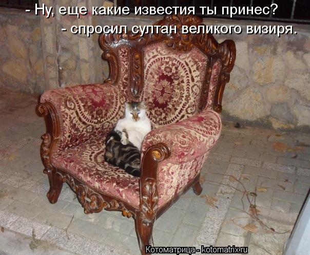 Котоматрица: - Ну, еще какие известия ты принес? - спросил султан великого визиря.