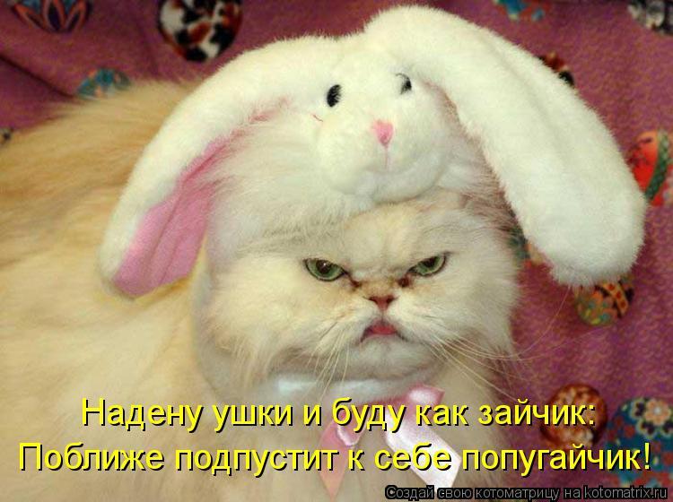 Котоматрица - Надену ушки и буду как зайчик: Поближе подпустит к себе попугайчик!