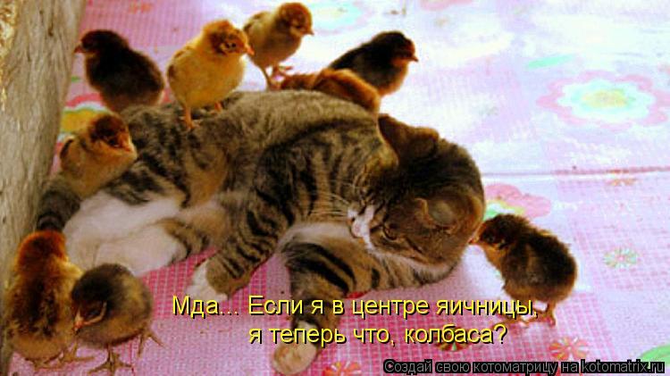 http://kotomatrix.ru/images/lolz/2012/04/17/1166277.jpg
