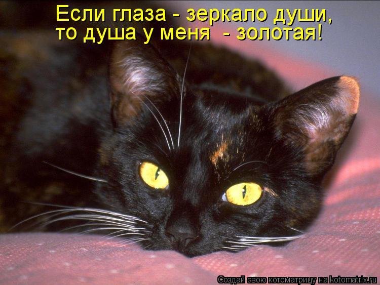 Котоматрица - Если глаза - зеркало души,  то душа у меня  - золотая!