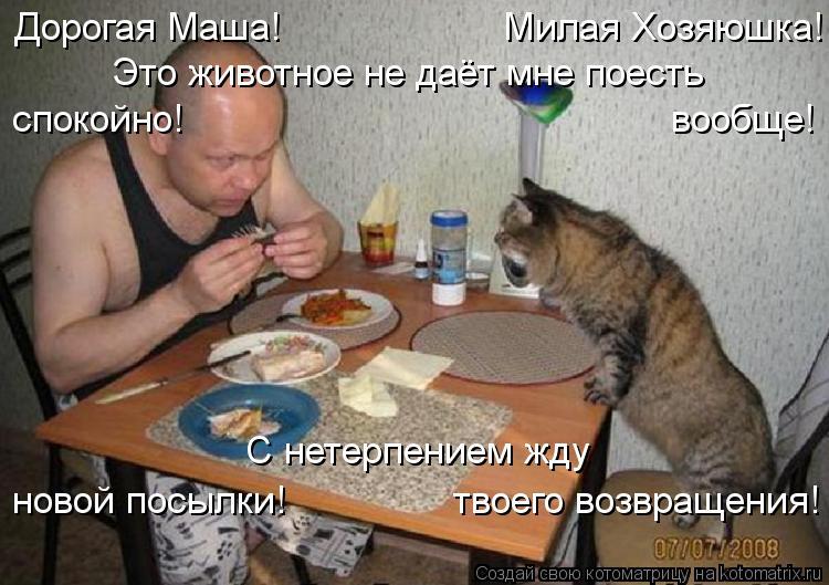 Котоматрица: Дорогая Маша!                    Милая Хозяюшка! Это животное не даёт мне поесть спокойно!                                            вообще! С нетерпением жду новой по