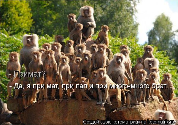 http://kotomatrix.ru/images/lolz/2012/04/17/1166411.jpg