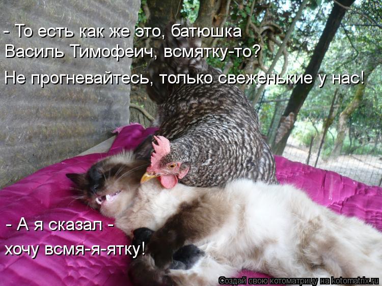 Котоматрица: - То есть как же это, батюшка Василь Тимофеич, всмятку-то? Не прогневайтесь, только свеженькие у нас! - А я сказал -  хочу всмя-я-ятку!