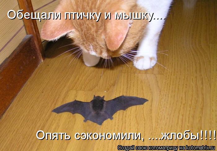 Котоматрица: Обещали птичку и мышку.... Опять сэкономили, ....жлобы!!!!