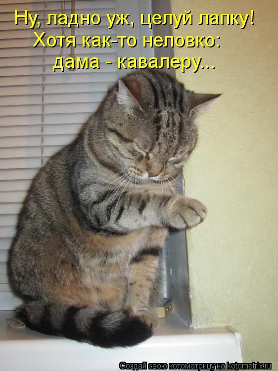 Котоматрица: Ну, ладно уж, целуй лапку! дама - кавалеру... Хотя как-то неловко: