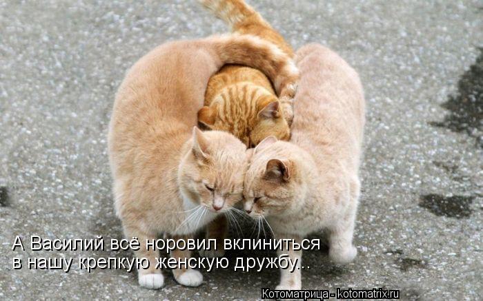 Котоматрица: А Василий всё норовил вклиниться  в нашу крепкую женскую дружбу...