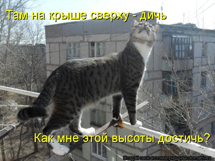 Котоматрица: Там на крыше сверху - дичь Как мне этой высоты достичь?