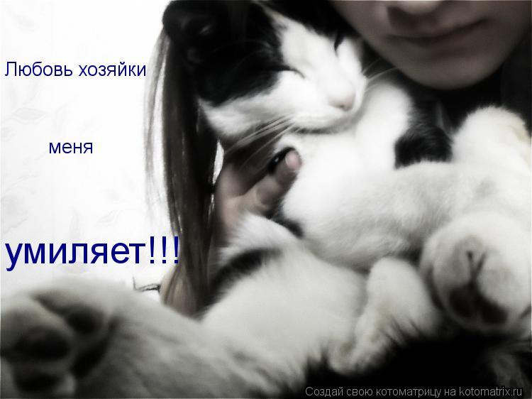 Котоматрица: Любовь хозяйки меня умиляет!!!