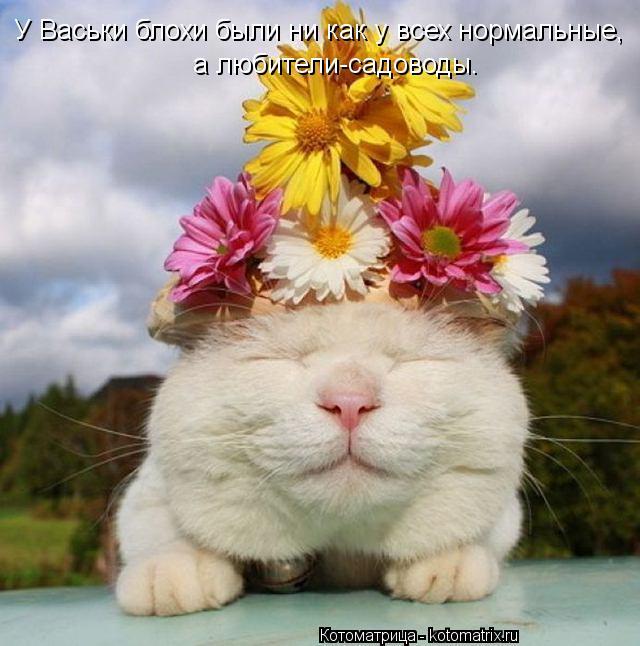 Котоматрица: У Васьки блохи были ни как у всех нормальные,  а любители-садоводы.
