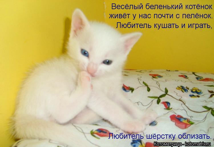 Котоматрица: Весёлый беленький котёнок живёт у нас почти с пелёнок. Любитель кушать и играть, Любитель шёрстку облизать.