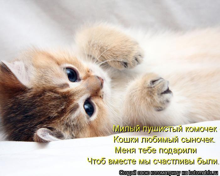 Котоматрица: Милый пушистый комочек -  Кошки любимый сыночек. Меня тебе подарили Чтоб вместе мы счастливы были.