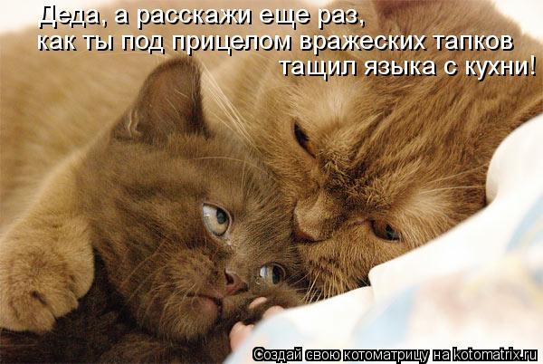Котоматрица: Деда, а расскажи еще раз, как ты под прицелом вражеских тапков тащил языка с кухни!
