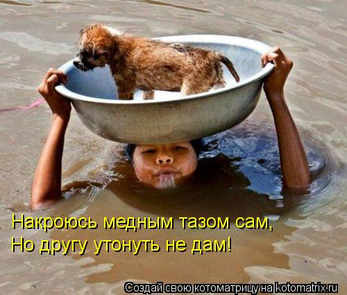 Котоматрица: Накроюсь медным тазом сам, Но другу утонуть не дам!