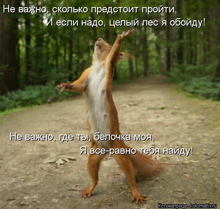 Котоматрица: Не важно, сколько предстоит пройти, И если надо, целый лес я обойду! Не важно, где ты, белочка моя, Я все-равно тебя найду!