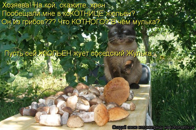Котоматрица: Хозяева! На кой, скажите, хрен Пообещали мне в коКОТНИЦЕ жюльен? Он из грибов??? Что КОТНОГО? В чём мулька? Пусть сей ЖЮЛЬЕН жуёт соседский Жул