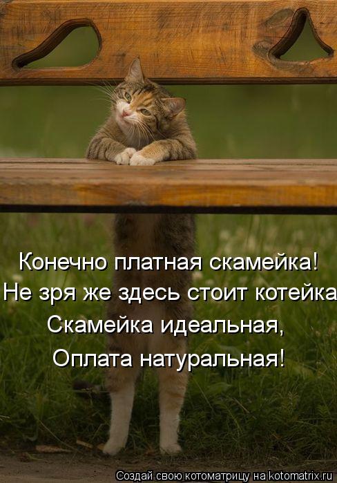 Котоматрица: Конечно платная скамейка! Не зря же здесь стоит котейка. Скамейка идеальная,  Оплата натуральная!