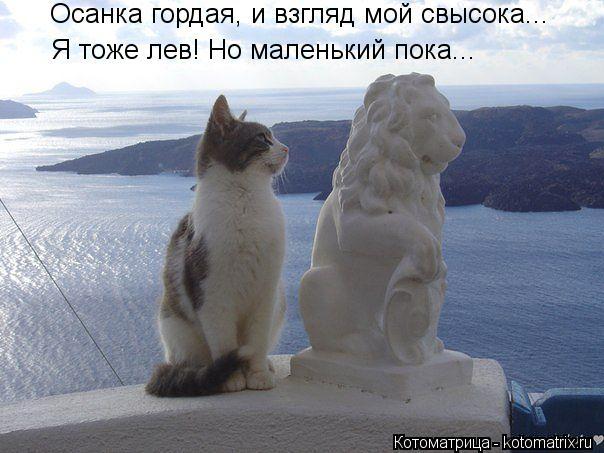 Котоматрица: Осанка гордая, и взгляд мой свысока... Я тоже лев! Но маленький пока...
