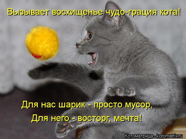 Котоматрица: Вызывает восхищенье чудо-грация кота! Для нас шарик - просто мусор, Для него - восторг, мечта!