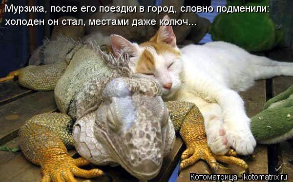 Котоматрица: Мурзика, после его поездки в город, словно подменили: холоден он стал, местами даже колюч...