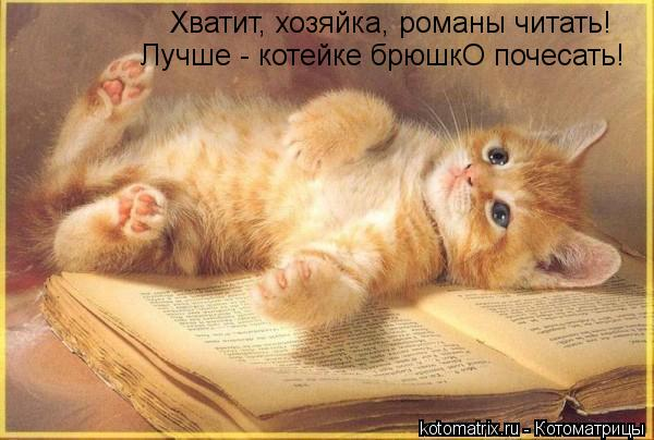 Котоматрица: Хватит, хозяйка, романы читать! Лучше - котейке брюшкО почесать!