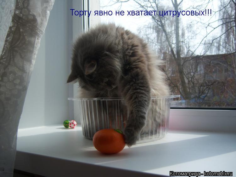 Котоматрица: Торту явно не хватает цитрусовых!!!