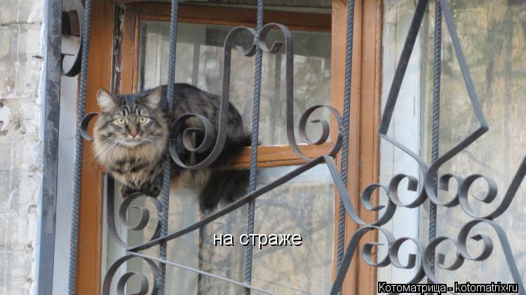 Котоматрица: на страже