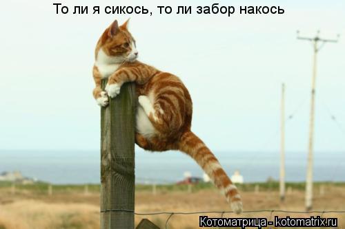 Котоматрица: То ли я сикось, то ли забор накось
