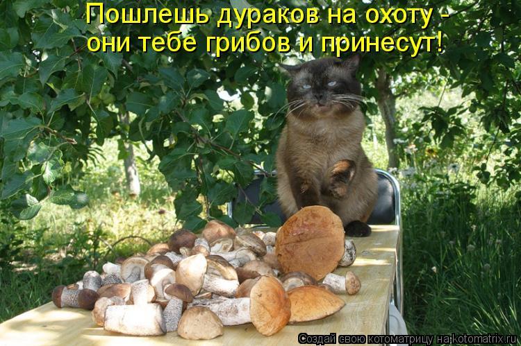 Котоматрица: Пошлешь дураков на охоту -  они тебе грибов и принесут!