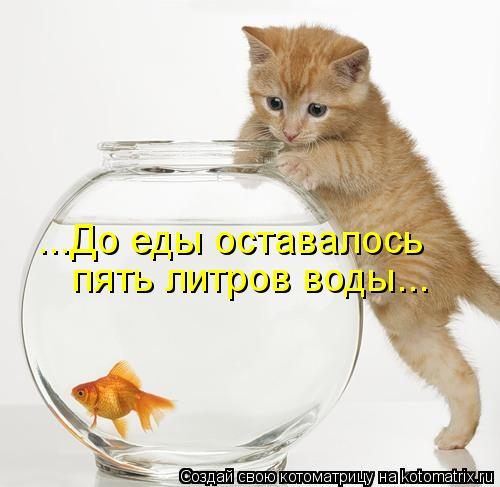 Котоматрица: ...До еды оставалось пять литров воды...