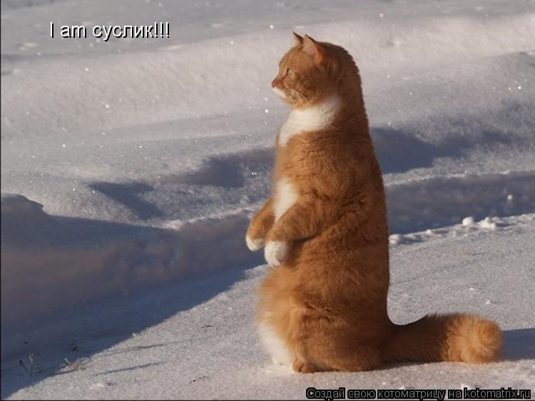 Котоматрица: I am суслик!!!
