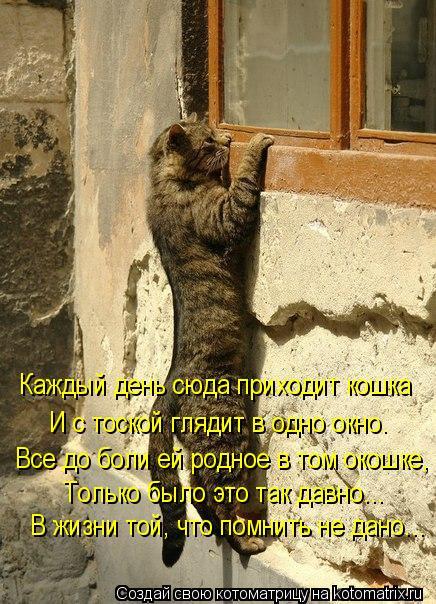 Котоматрица: В жизни той, что помнить не дано... Только было это так давно... Все до боли ей родное в том окошке, И с тоской глядит в одно окно. Каждый день сю