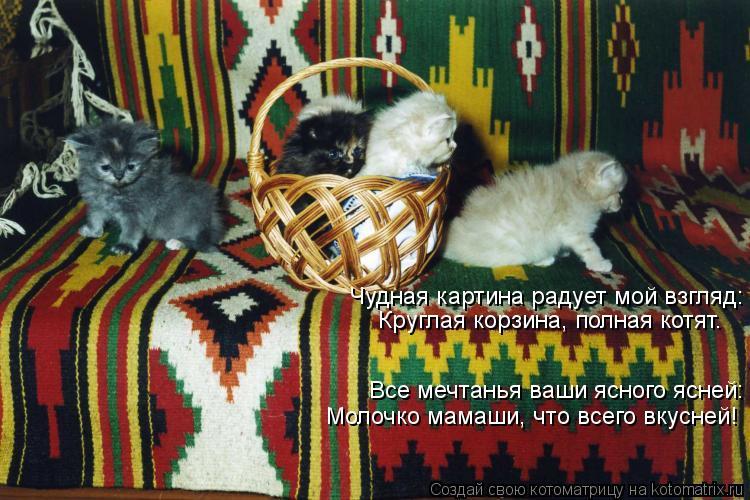 Котоматрица: Чудная картина радует мой взгляд: Круглая корзина, полная котят. Все мечтанья ваши ясного ясней: Молочко мамаши, что всего вкусней!