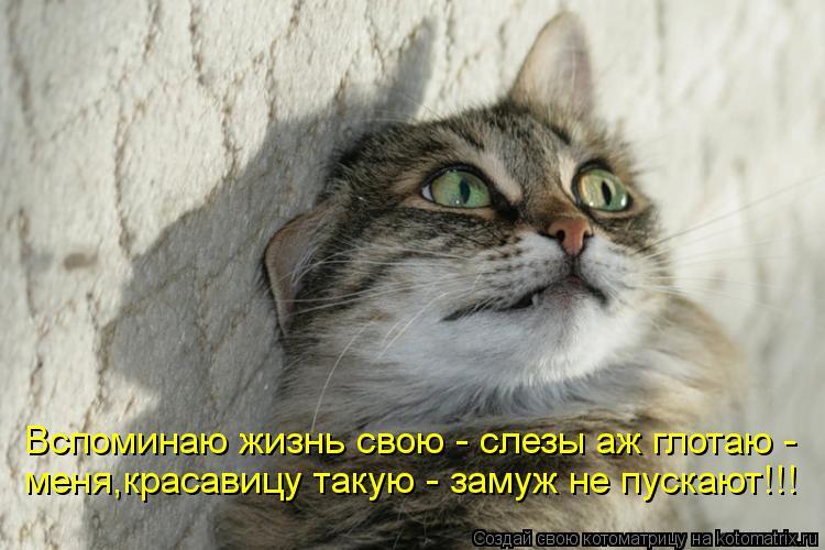 Котоматрица: Вспоминаю жизнь свою - слезы аж глотаю - меня,красавицу такую - замуж не пускают!!!